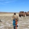 Camel Herding 2