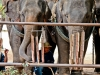 Elephants playing The ANGKLUNG!!!